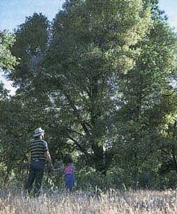 McCreary and daughter Megan walk among the oaks