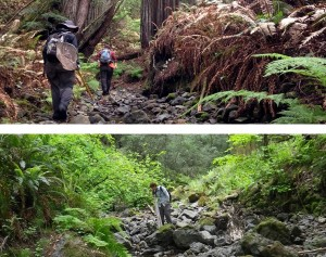 Researchers sampling California streams
