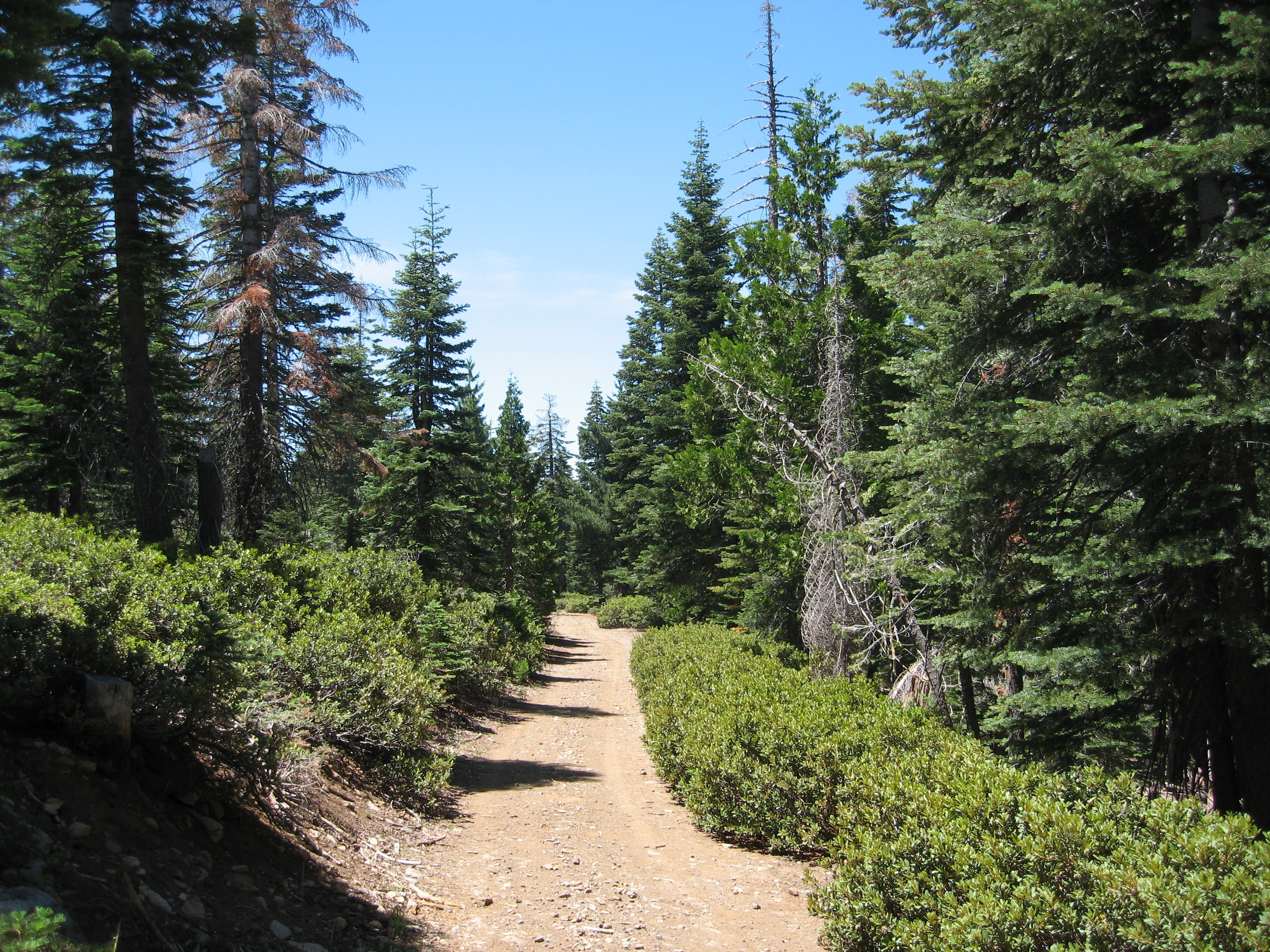 The Grouse Ridge Forest, donated to UC research, is located on three parcels in the headwaters of the Yuba River in Nevada County