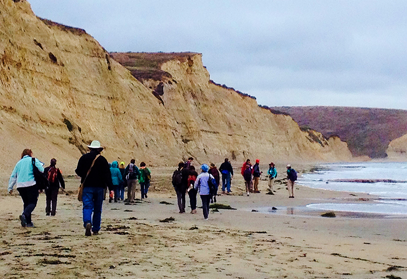 CalNat course members walking on a beach