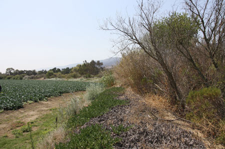 Image of habitats next to a broccoli field