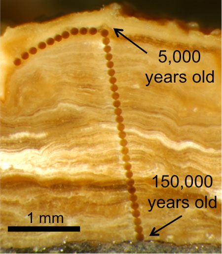 Magnified photograph of a cross-section through a 3 mm-thick pedothem soil deposit
