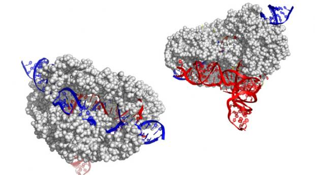 The CasX gene editor, smaller than CRISPR editing