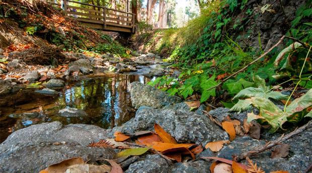 Fall leaves on rocks near a stream with a bridge in the background.