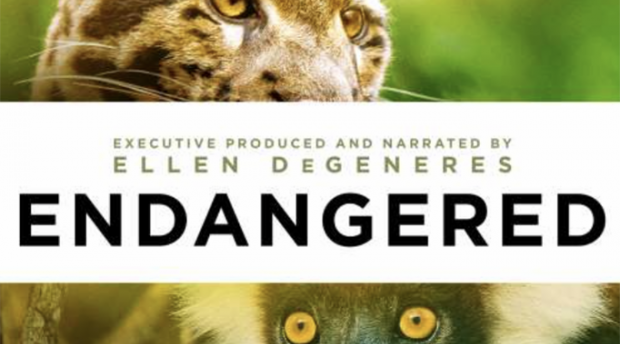 Cover image of documentary Endangered, showing leopard and primate faces