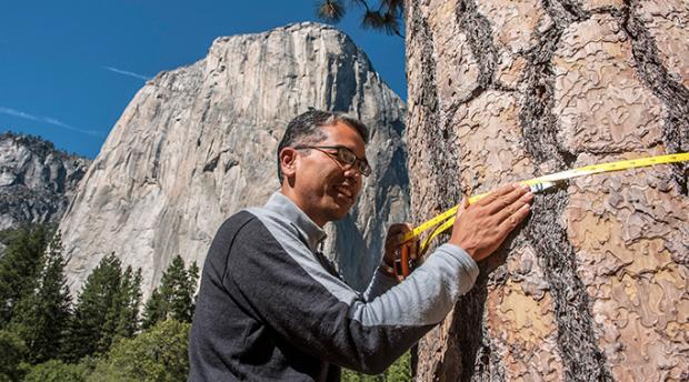 Patrick Gonzalez taking a measurement of a tree in Yosemite National Park