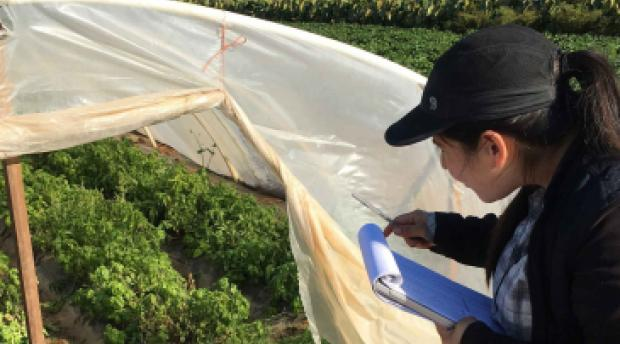 a researcher checks on the growth of plants in a greenhouse