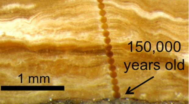 Magnified photograph of a cross-section through a 3 mm-thick pedothem soil deposit from Wyoming