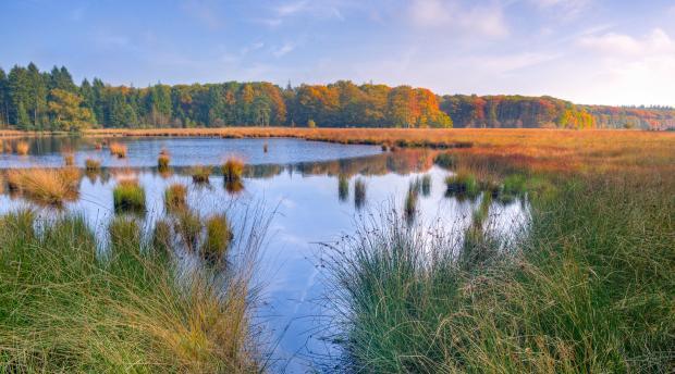 Marsh in fall time