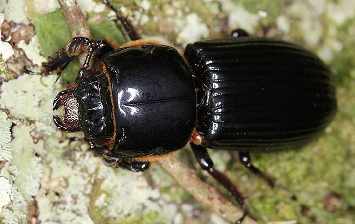 Photo of a beetle.