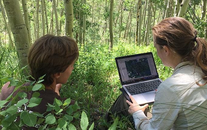 Two researchers with a laptop in an aspen grove