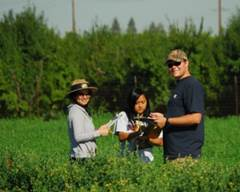 Researchers in an alfalfa field