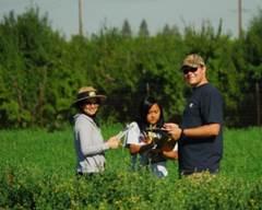 Researchers in an alfalfa field