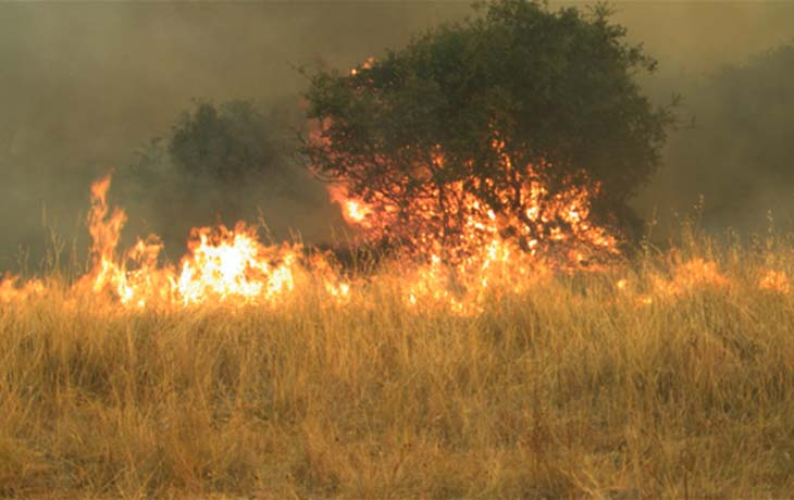 A tree and grassland caught on fire.