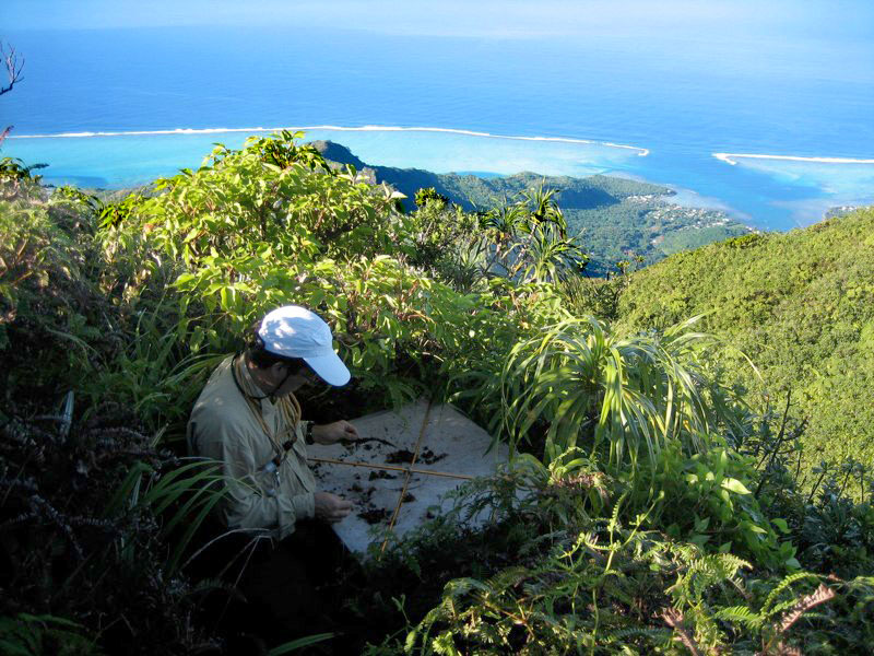 Researcher collecting beetles as part of the Moorea BioCode Project