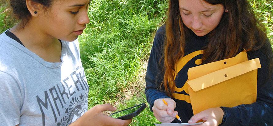 collect California bay laurel leaves