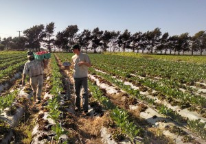 PIcture of a graduate student talking to a farmer in a field.