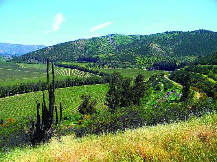 Odjfell Vineyards Chile