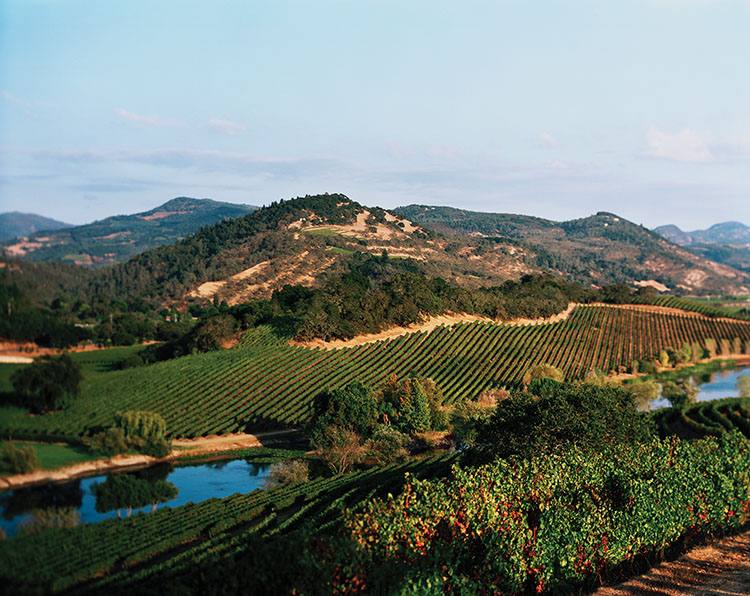 Quintessa Vineyard