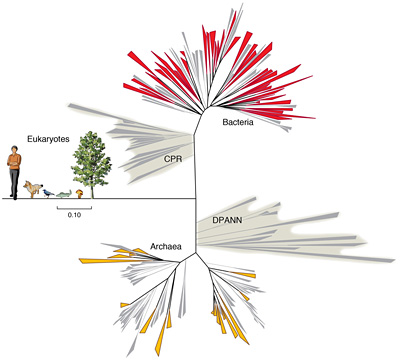 Diagram of the tree of life with life evolving from Archaea