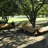 The Forestry Club commemorative benches, in place less then a day, are already an appealing resting spot.