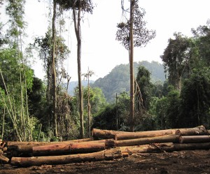 Logging in a tropical forest. Photo courtesy of Ben Ramage