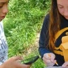 Two students collecting bay leaf data.