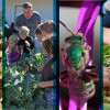 Images courtesy of Blodgett Forest Research Station, Kevi Mace, Julie Van Scoy.