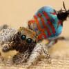 Sparklemuffin spider